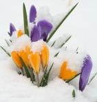 flower-snow